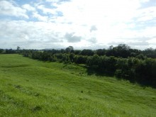 Riparian remediation project site
