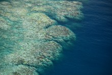 2017 coral bleaching from the air