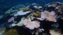 Reef bleaching in March 2017