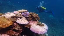Reef bleaching in Marh 2017