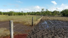 Pig and cattle damage to study wetland site